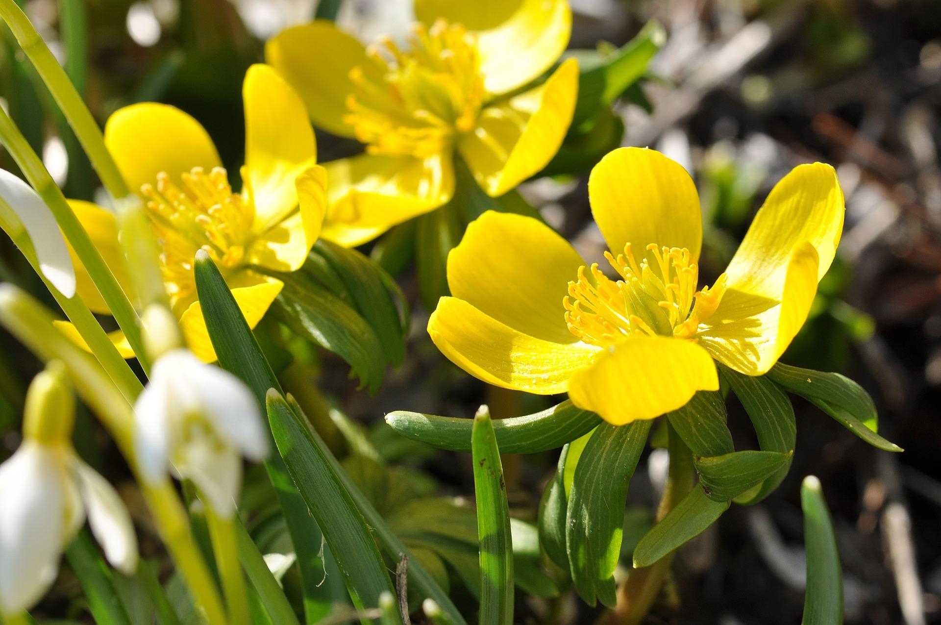 Les plantes couvre sol jardiner autrement for Solde plante jardin