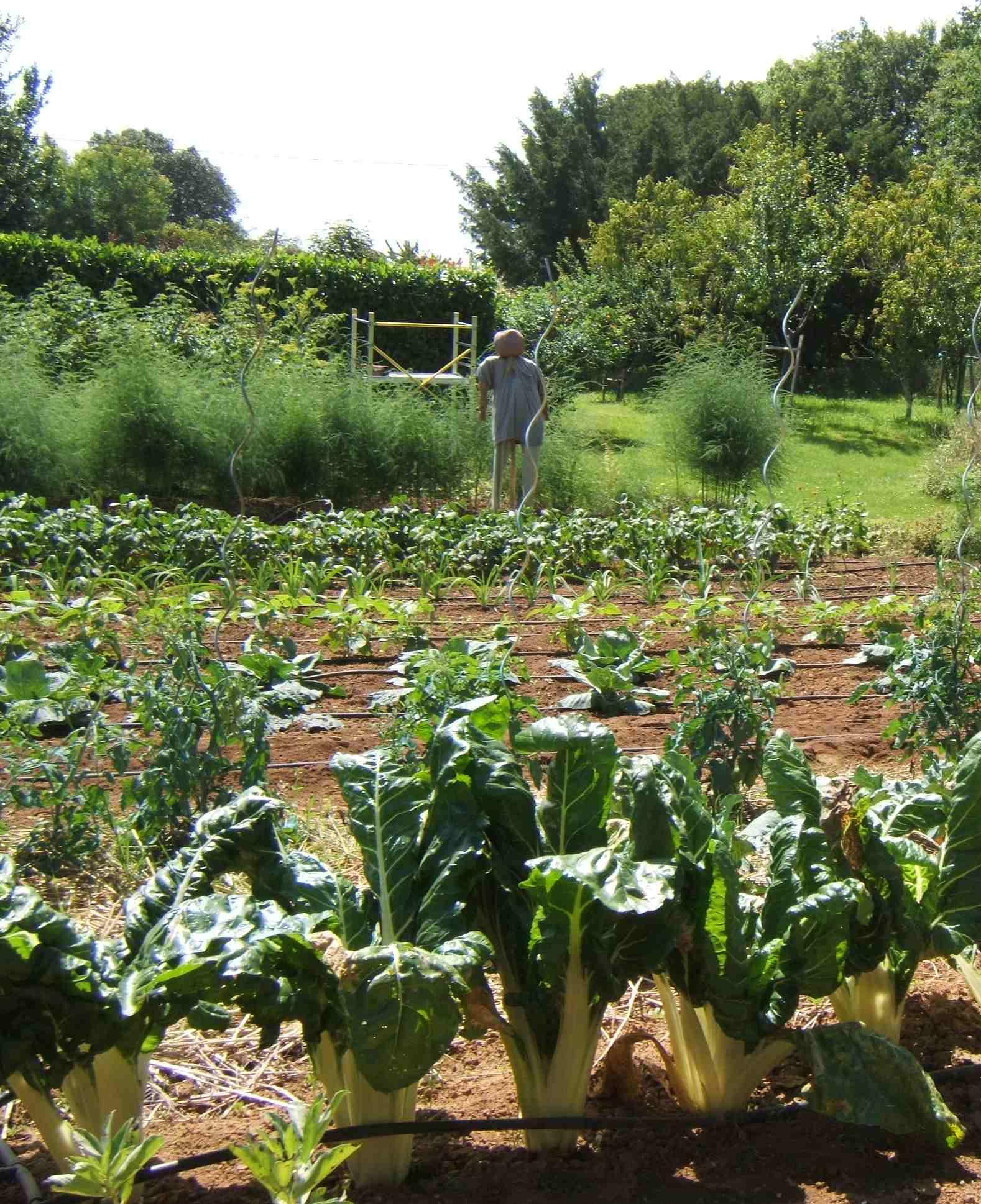 Laur at 2013 le jardin de bernard patry pisany 17 for Au jardin des sans pourquoi