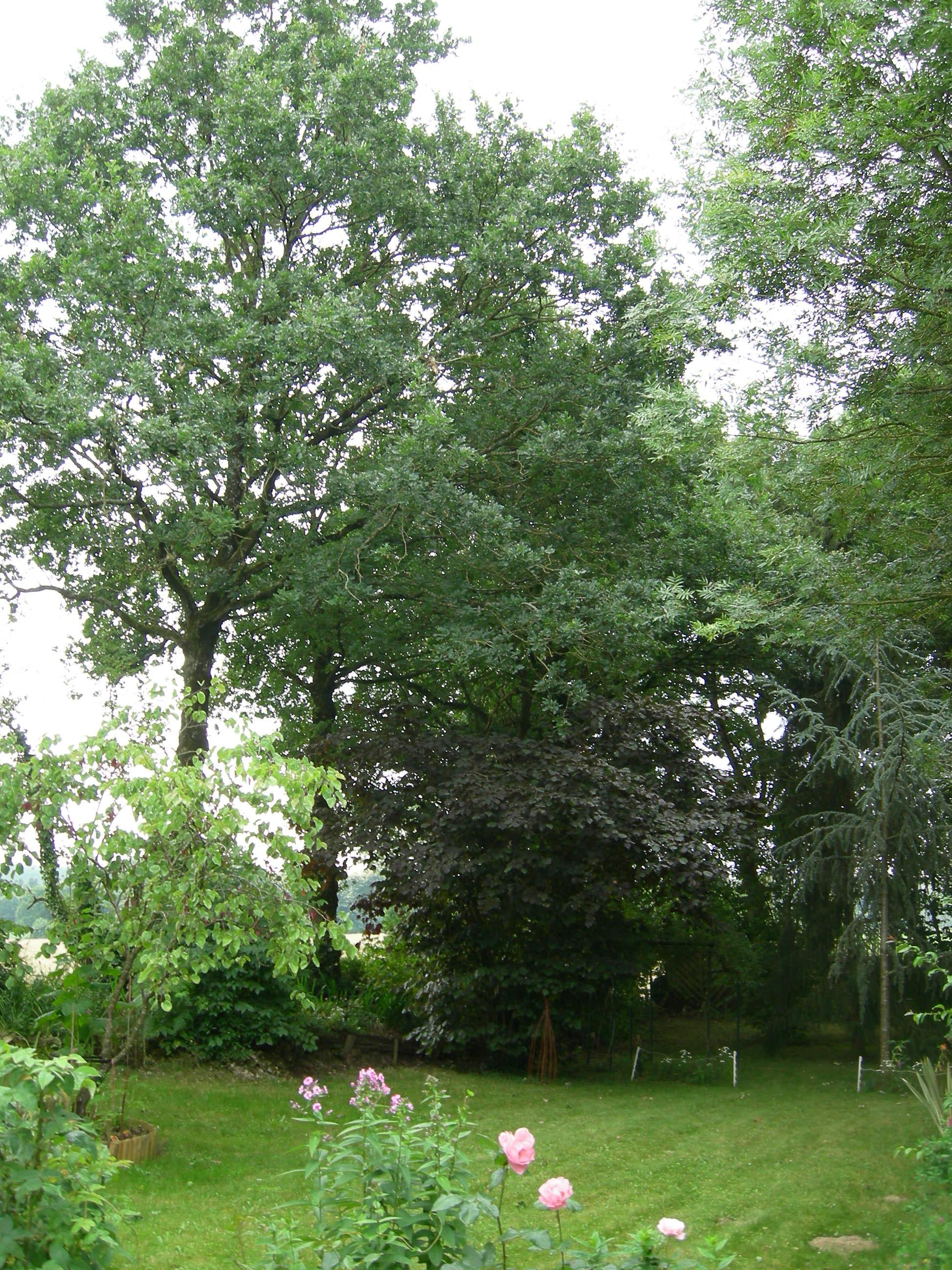 Laur at 2011 le jardin de daniel bret guilliers 56 for Entretien jardin 56
