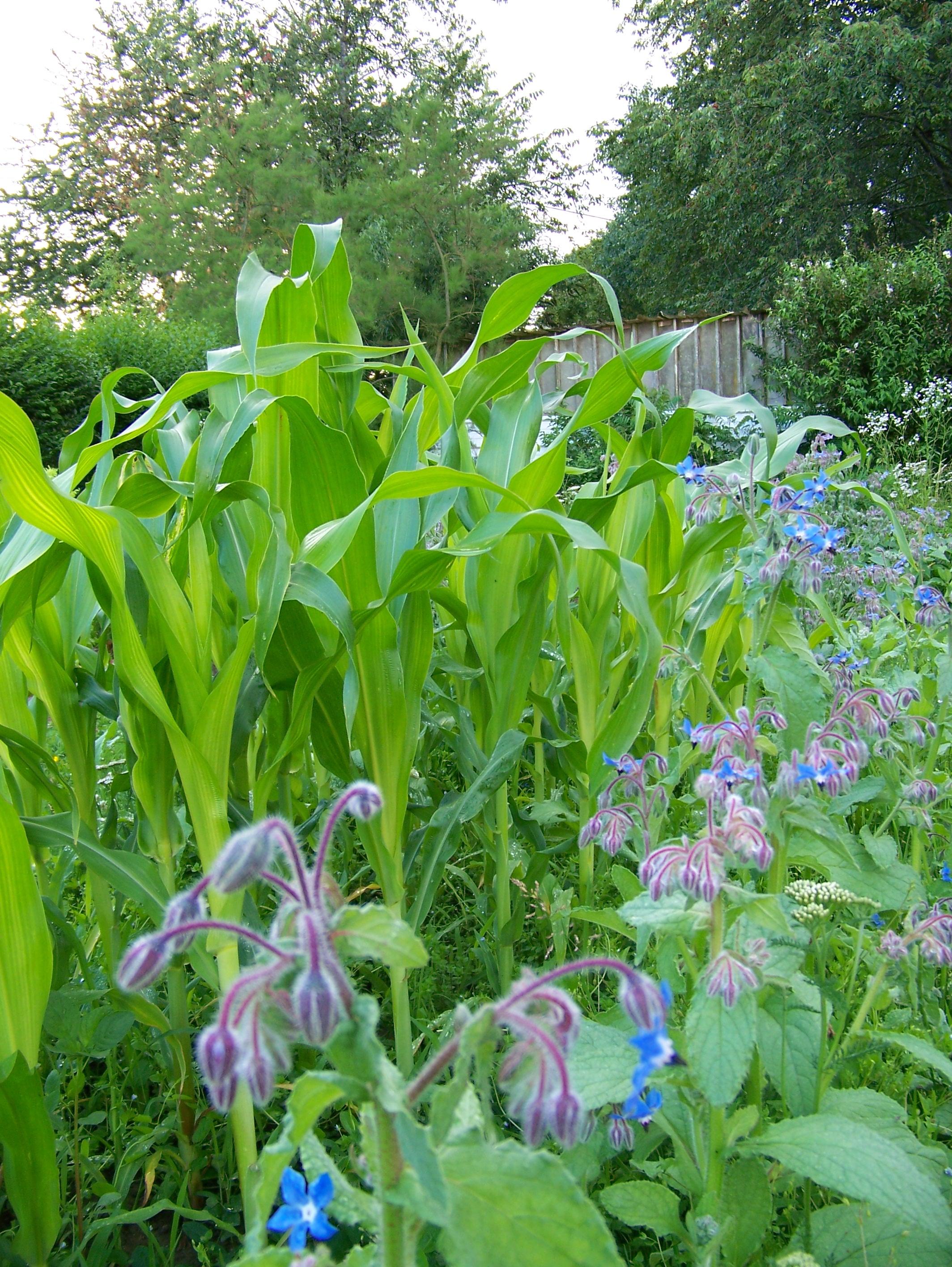 Laur ate 2013 le jardin de vanessa grosjean les hays for Au jardin des sans pourquoi