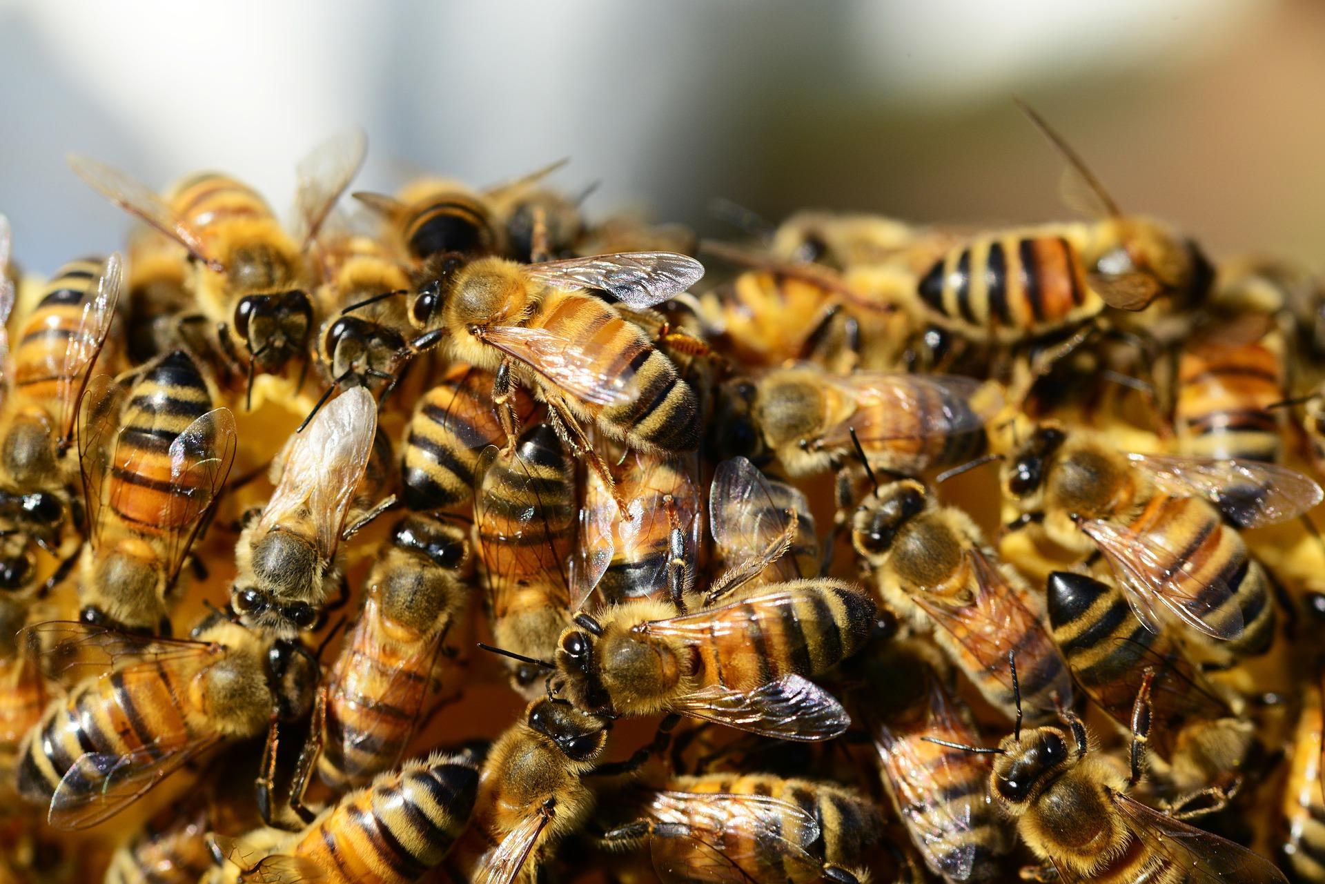 abeilles et pesticides