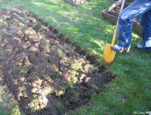 Retournement d'une pelouse avec une pelle-bêche.