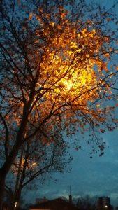 Effet de l'éclairage artificiel à l'automne sur un platane