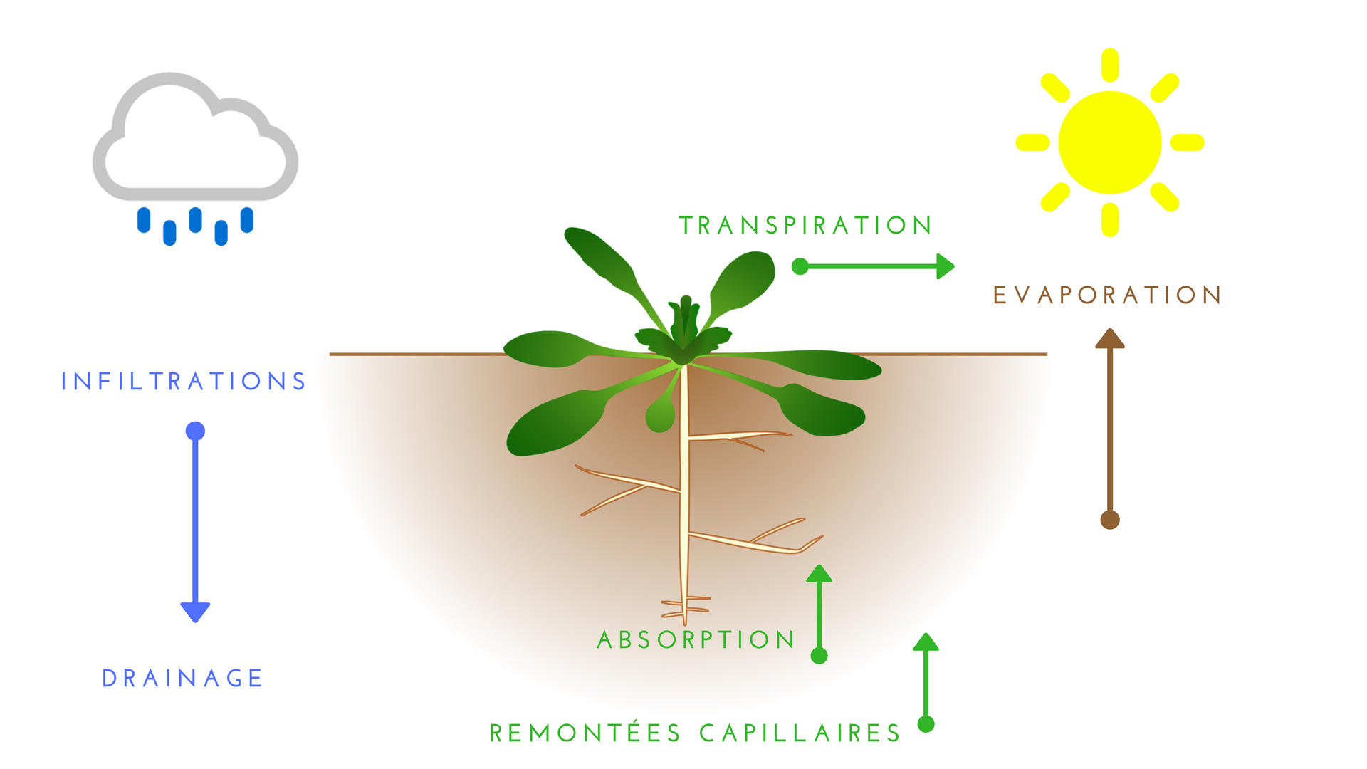 l'évapotranspiration