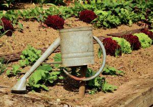 Les conseils d'arrosage de jardiner autrement