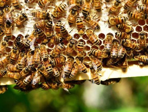 Accueillir les pollinisateurs