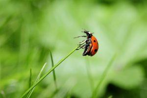 encourager la biodiversité au jardin