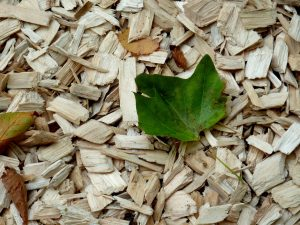 Paillage coupeau de bois