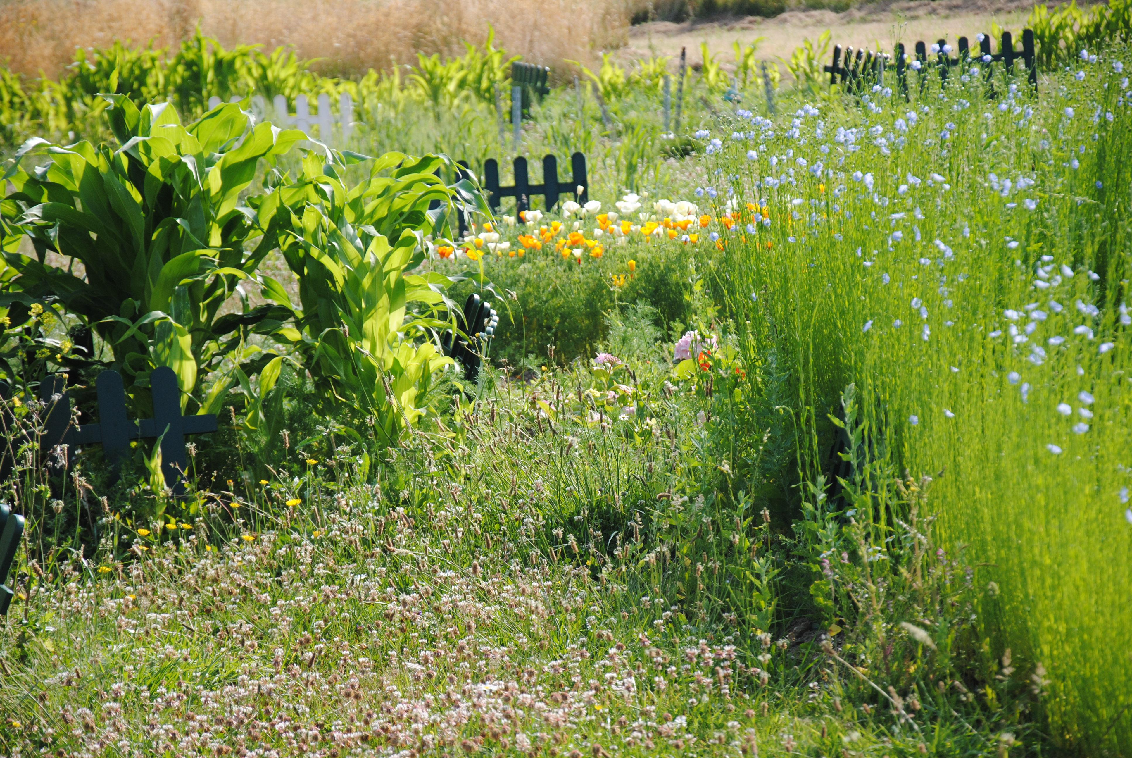 11-bangor-prairie-fleurie