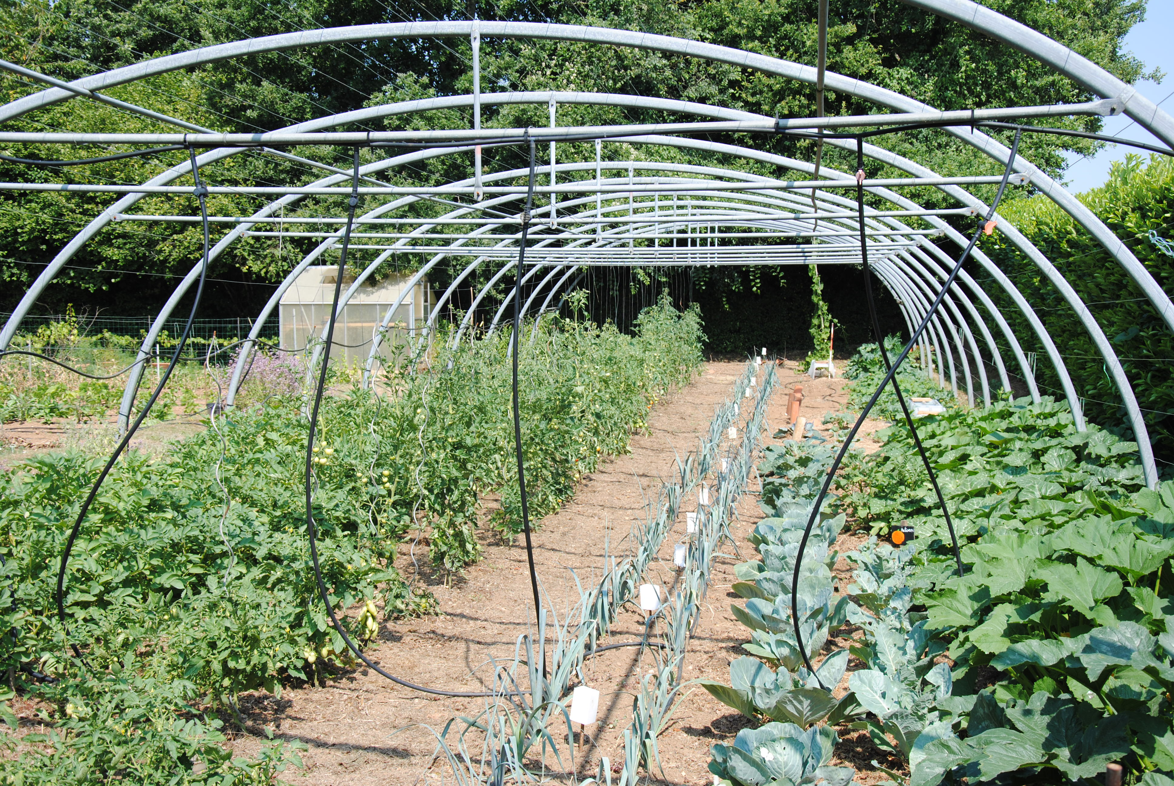 5-pisany-potager-sous-tunnel