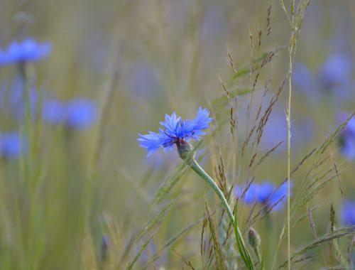 flore menacée