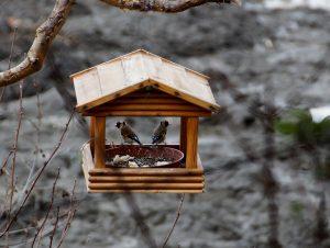 Nourrissez et abreuvez les oiseaux
