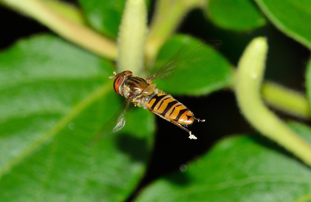 La biodiversit au jardin jardiner autrement Jardinerie par correspondance