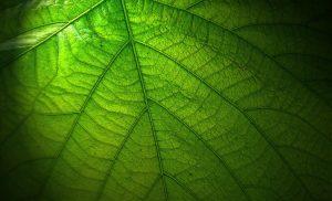 Les besoins en lumière des plantes