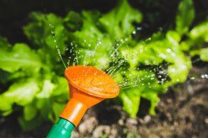 les besoins en eau des plantes