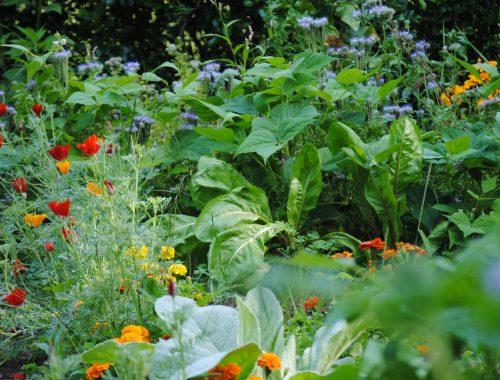 Réduire les pesticides au jardin (c) A