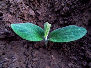 Les relations sol/plante