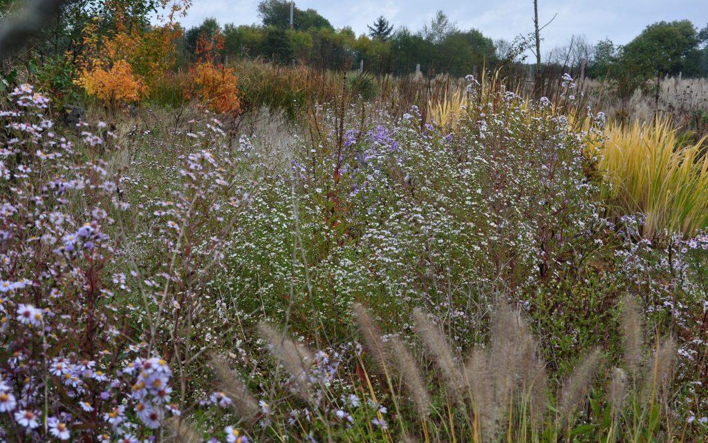 Eric Lenoir : un jardin expérimental - Jardiner Autrement