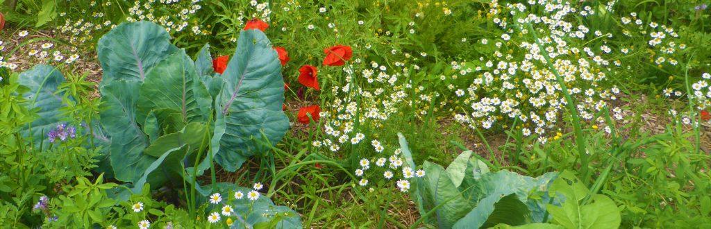 La biodiversité fleurie au jardin (© Michel Cognard)