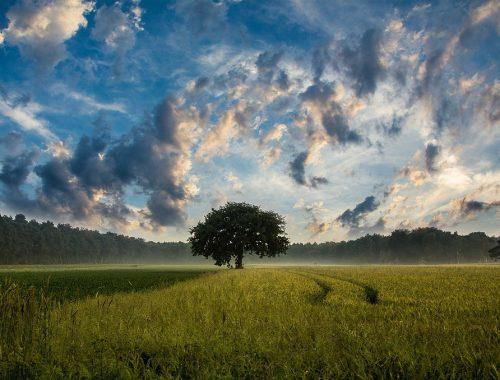 arbres et champs
