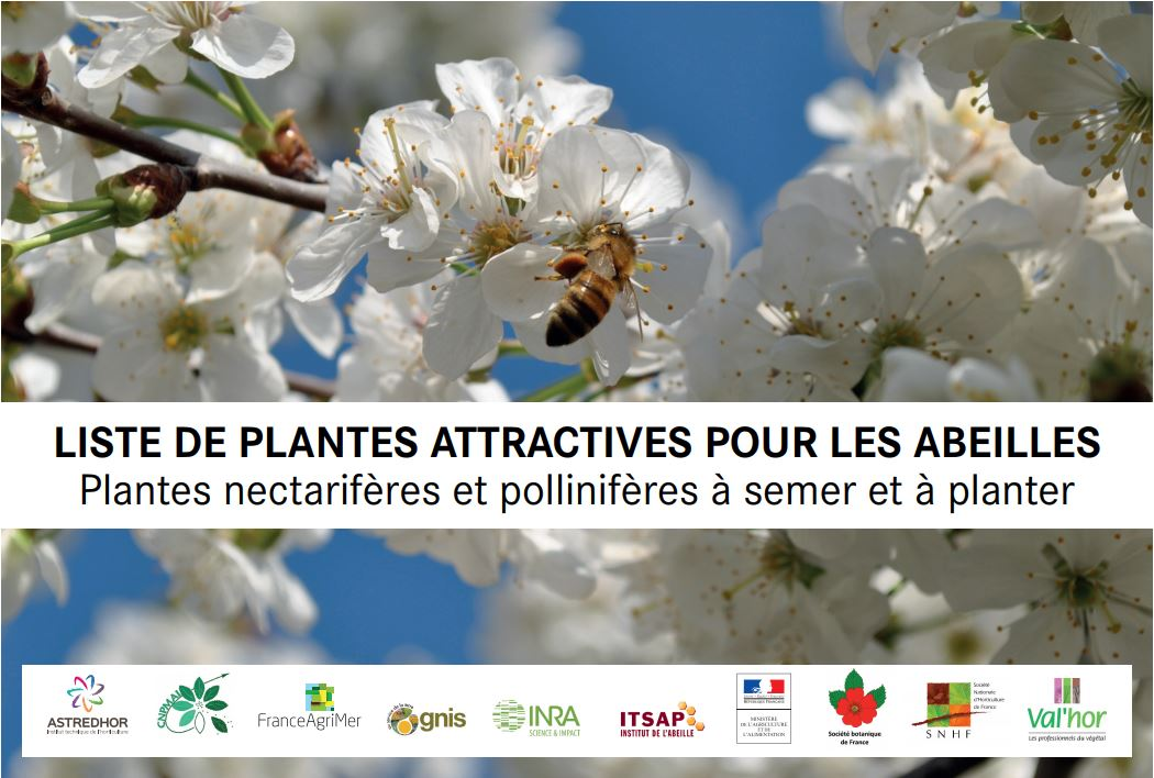 200 plantes attractives pour les abeilles
