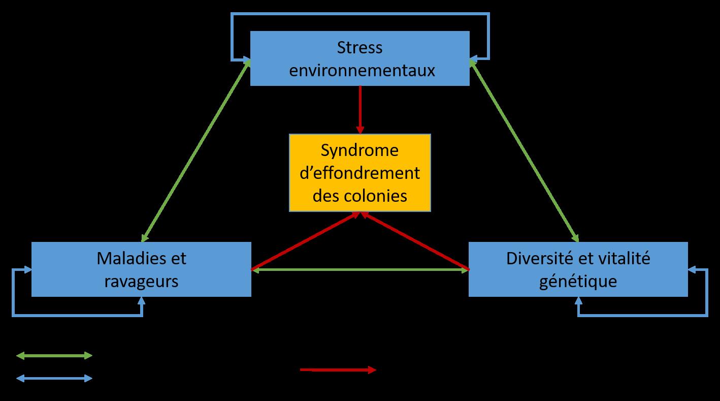 Différents types d'effets synergiques entre les groupes de facteurs impliqués dans le syndrome d'effondrement des colonies (Potts et al., 2010).