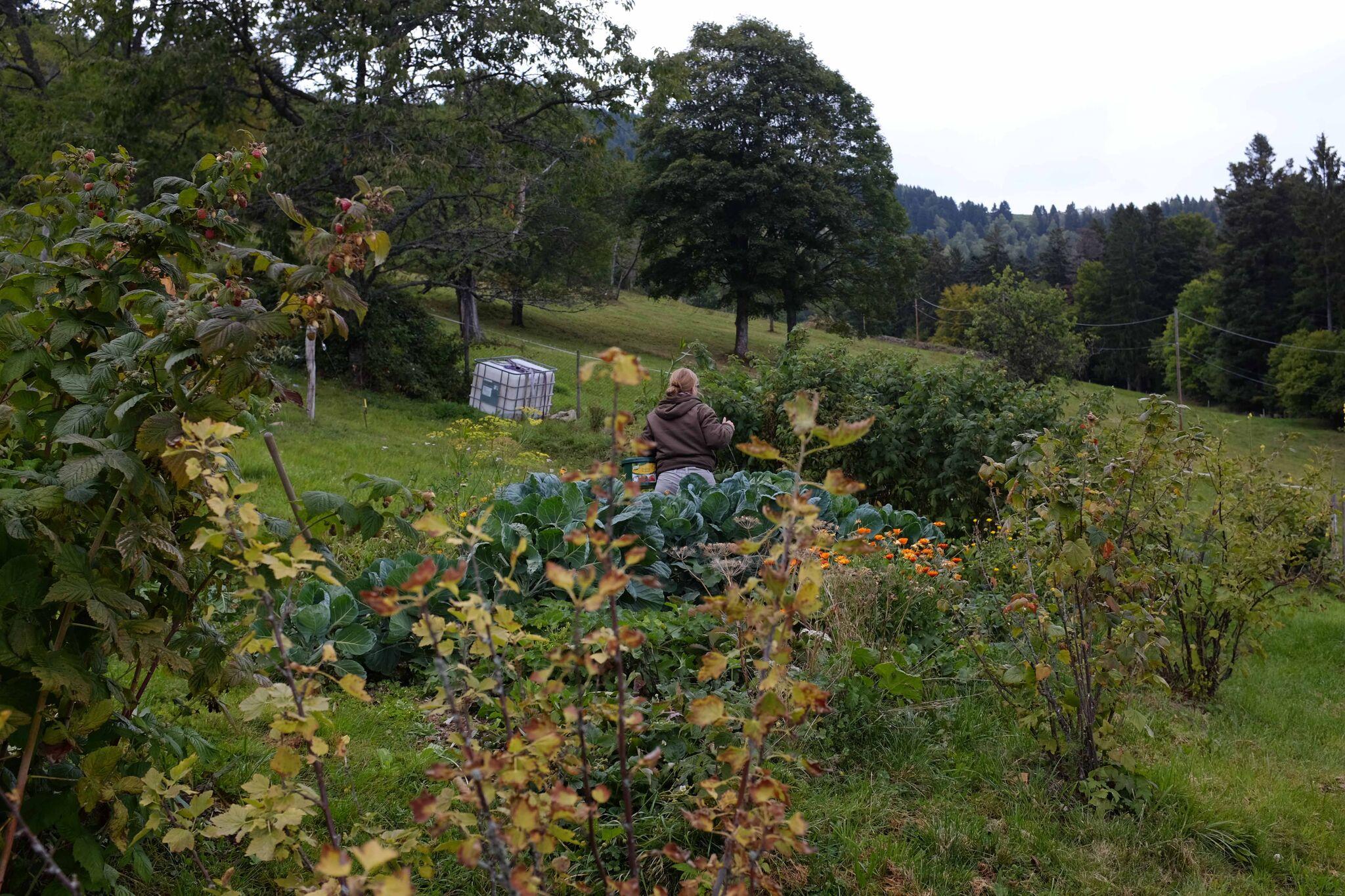 La collecte des limaces au jardin (© Noëlle Guillot).