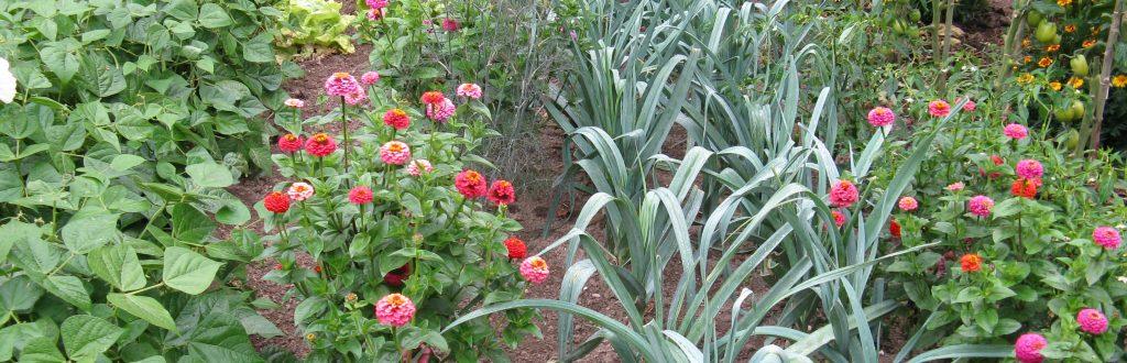 Association fleurs légumes