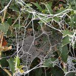 29-Toile d'araignée givrée © E. Lebret