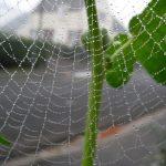 3-Toile d'araignée et rosée © F. Brigand