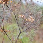 59-Toile d'araignée © J. Chabault