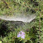 72-Toile d'araignée © M. Lénart