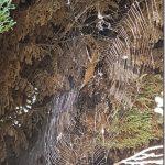 75-Toile d'araignée © C. Doucet