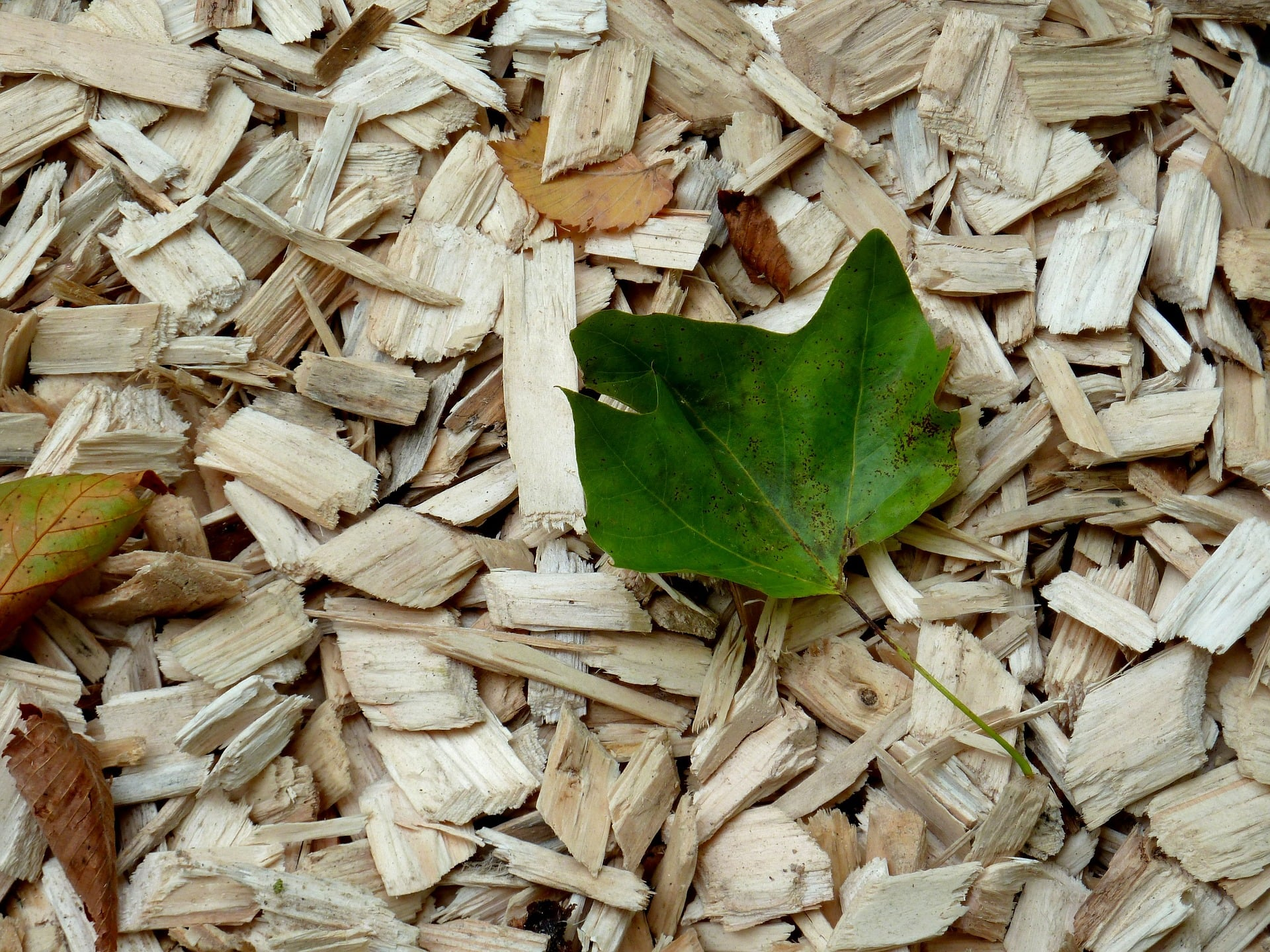 copeaux de bois pour paillage au jardin