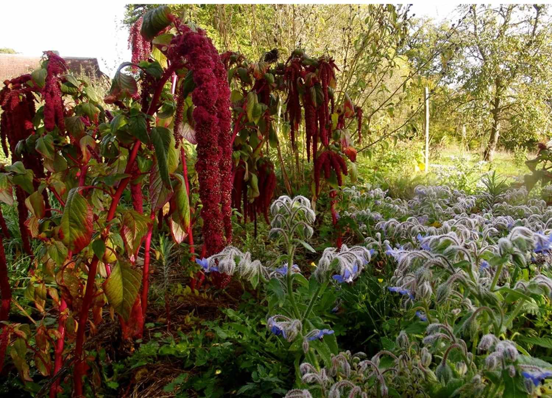 Le jardin de Nathalie Ranjon