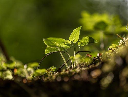 Préservation du sol dans un jardin pour le climat