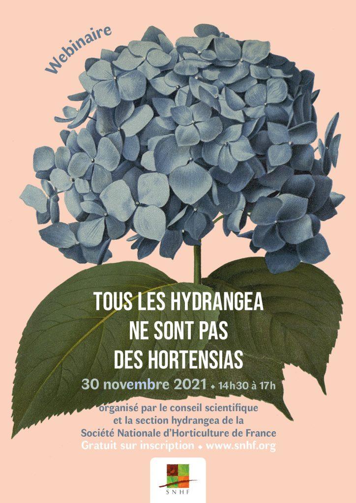 """Webinaire """"Tous les hydrangea ne sont pas des hortensias"""""""