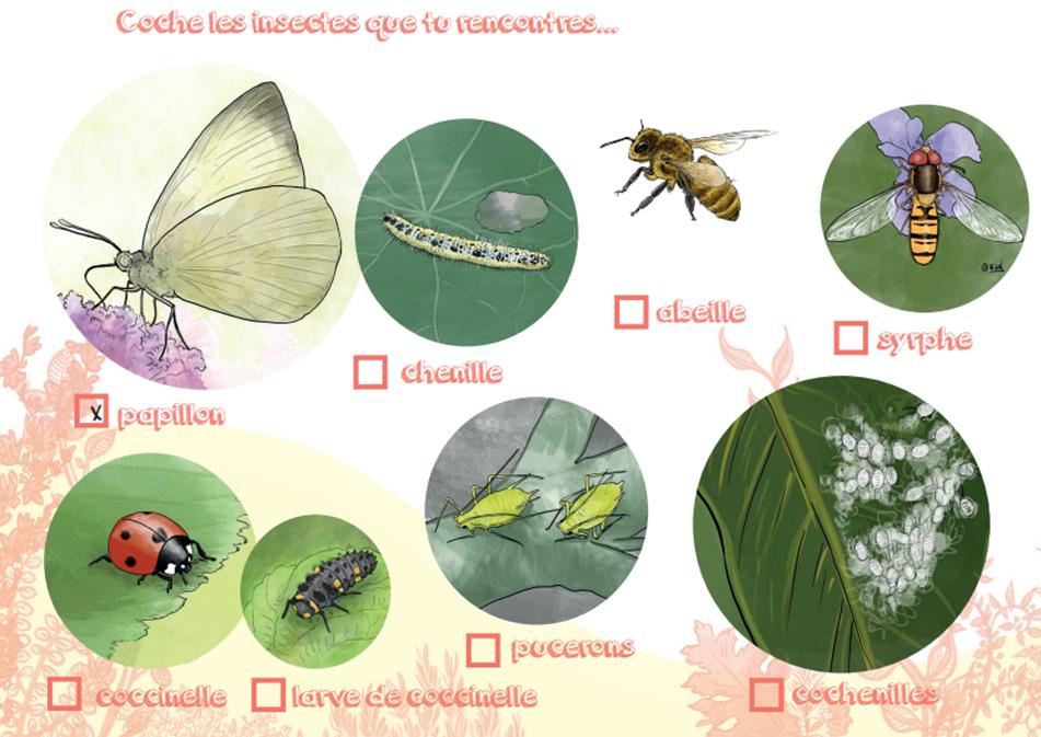 Illustration des insectes dans la nature pour les enfants