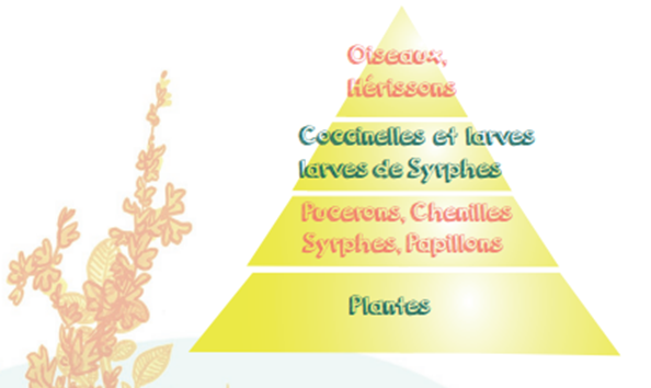 Illustration pyramide alimentaire